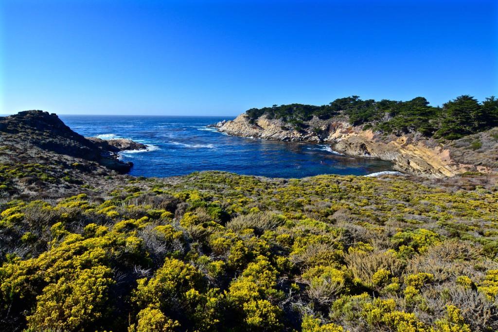 Bay at Point Lobos