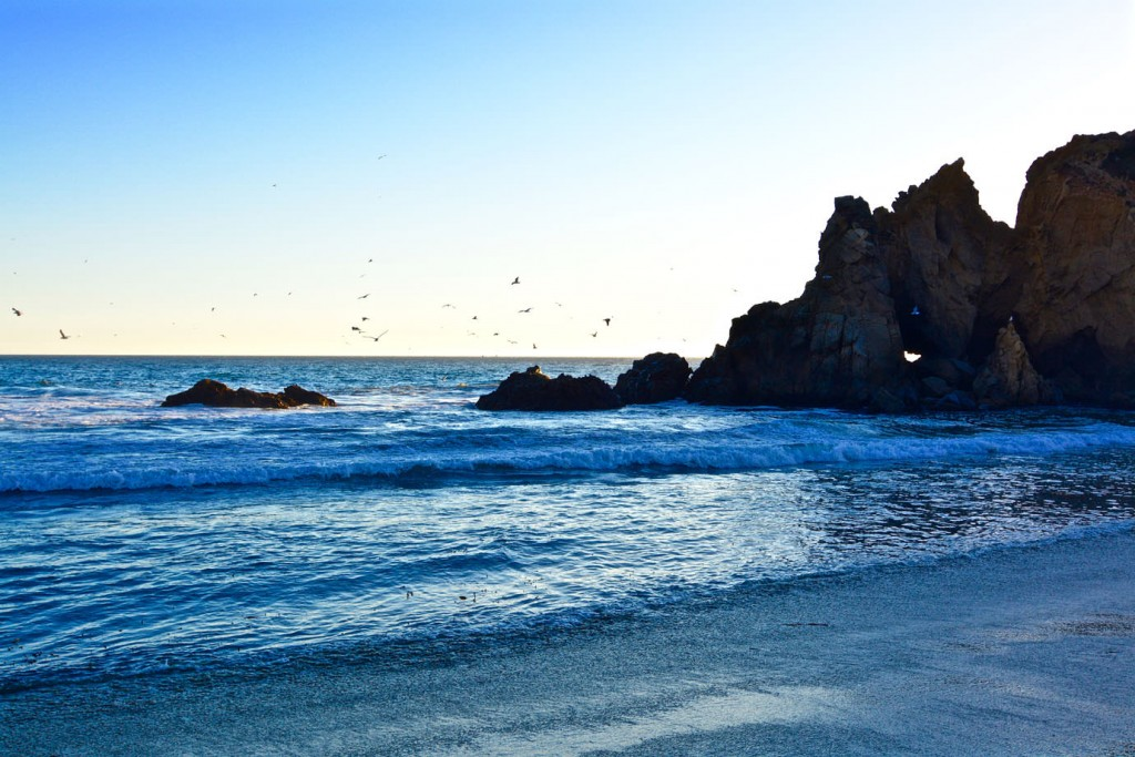 Seagulls near rocks