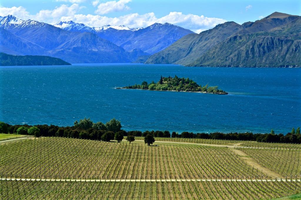 Wineyard in front of Island on Lake Wanaka