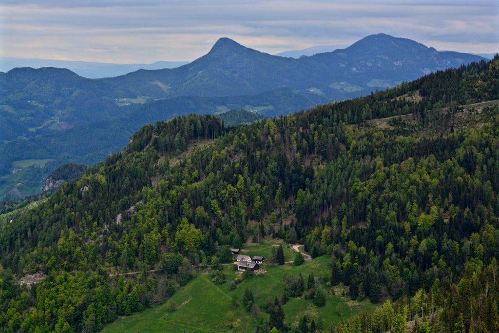 Logar Valley, Forrest