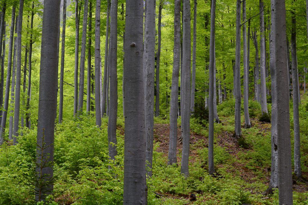 Trees, Forrest, Logar Valley